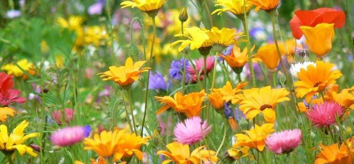 Quelle fleur pour votre parfum ?