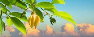 Pourquoi les femmes affectionnent l'odeur de l'Ylang-Ylang ?